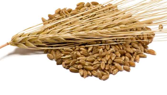 Barley for Hair Fall Control