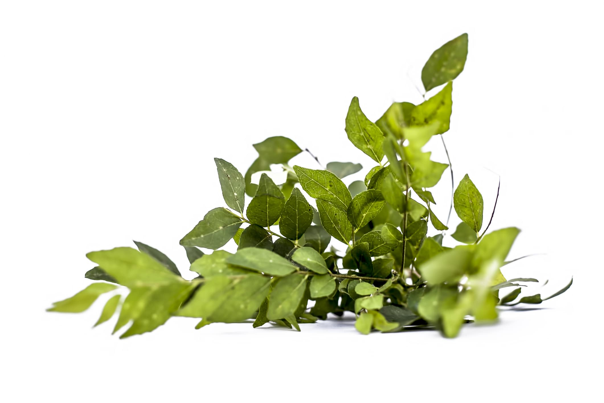 eating curry leaves for white hair