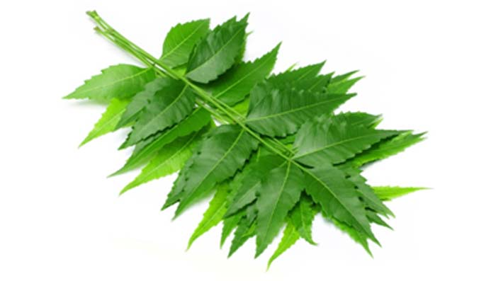 Neem to Cure Dandruff