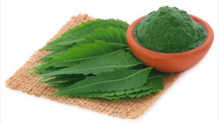 Neem for Pimple Marks