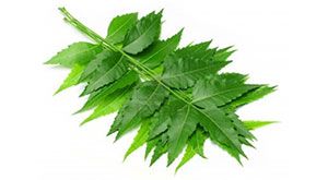 Amazing Beauty Benefits With Neem For Skin and Hair