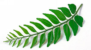 Benefits of Curry Leaves for Hair